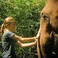 Elephant Tours